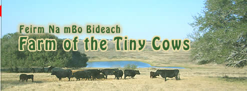 link Farm of the Tiny Cows, Dexter Cattle in Texas, heifer calves, bull calves, bred cows and pairs